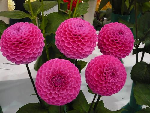 common garden flowers