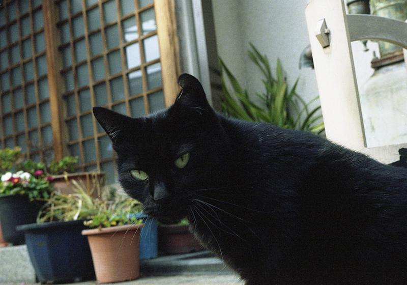 お寺の黒猫