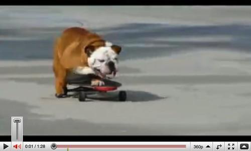 skatingdog.audio.adjustment
