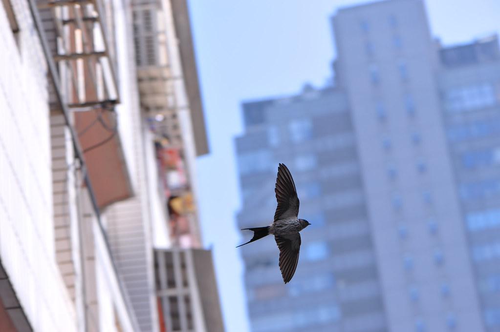 打鳥隨拍.