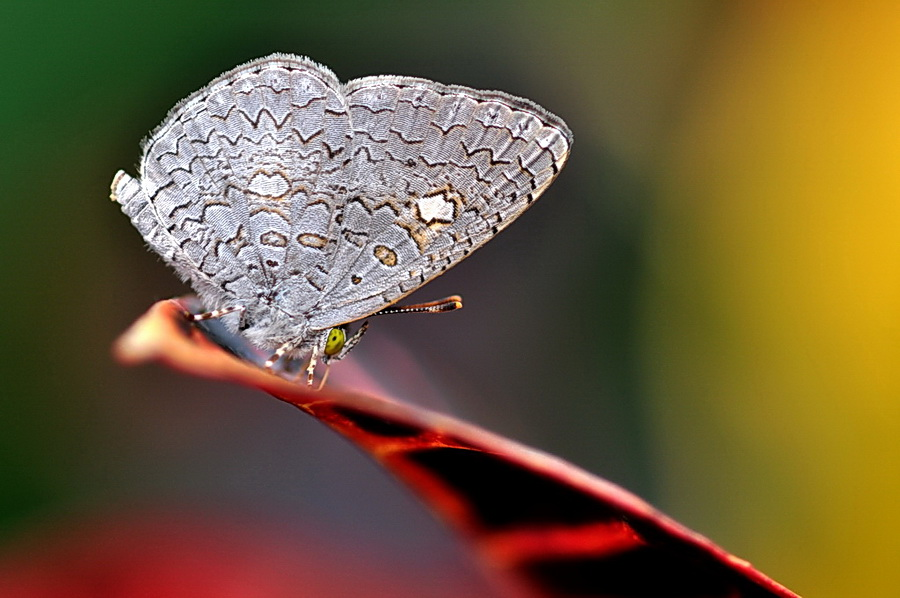只是愛拍蝶........