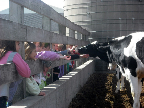 Third Graders from Gibraltar, Wisconsin Area Schools meet the Dairy Cows