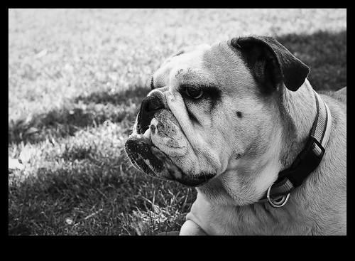 Día de perros