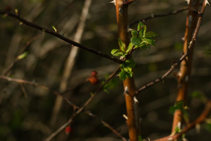 Spring in Alexeevka #3