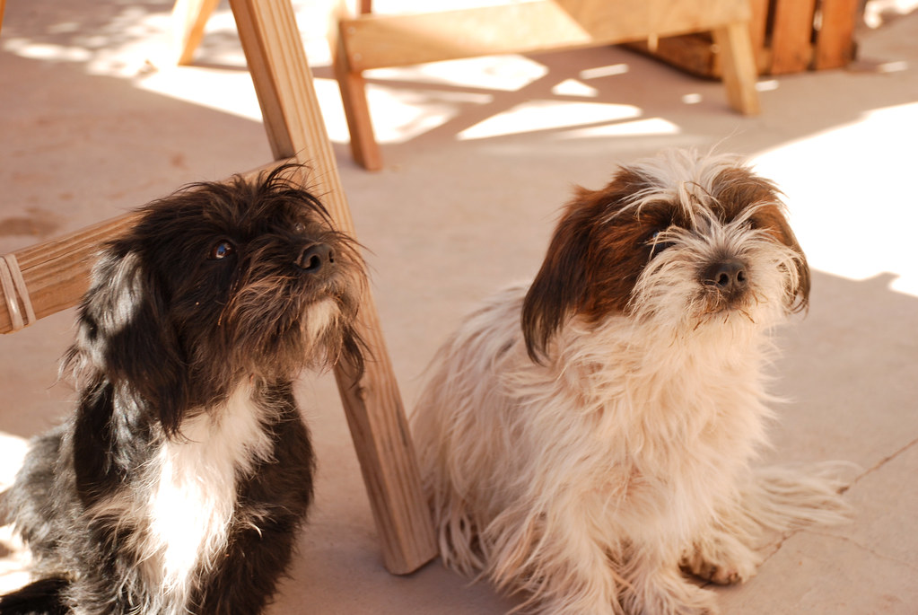 Two puppies in Humahuaca