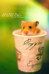 138/365 Hamster. (Victor Mui) Tags: blue original dog cute eye classic cup coffee up look canon project puppy photography 50mm cafe eyes day looking mr tea random bokeh pop victor weasel hamster cannon 5d goes 365 victors peer teas f12 138 mui f12l disfocus 138365 mrteas