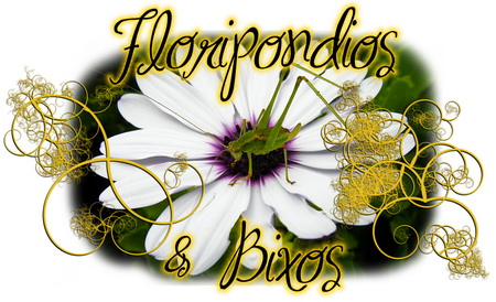 Floripondios & Bixos - comentar