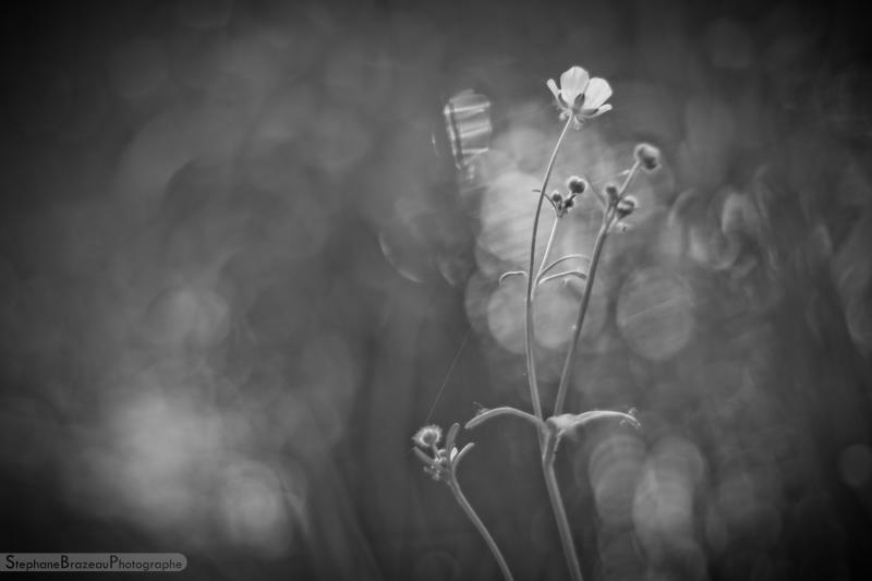 Herbal in BW - 03