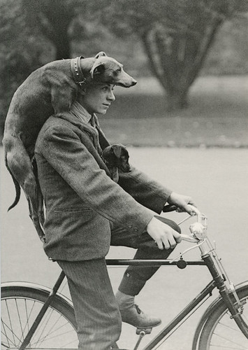 man with dogs on bike