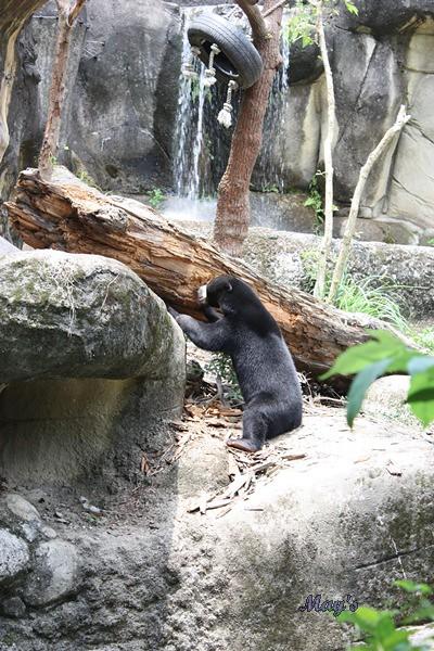 990522台北動物園 023
