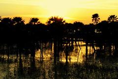 Entardecer (Ricardo Baia) Tags: sol água lago palmeiras estrada entardecer
