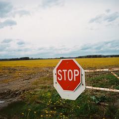 (hopefuldoubtful) Tags: film field yellow stop yashicamat124g 400vc autaut