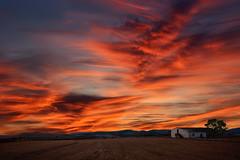 Atardecer en la granja (Para el amigo Salva del Saz) (martin zalba) Tags: sunset red landscape atardecer paisaje