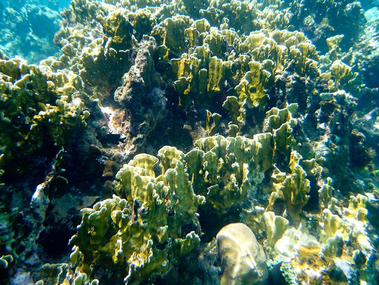 20100503-Jamaica WP-4130