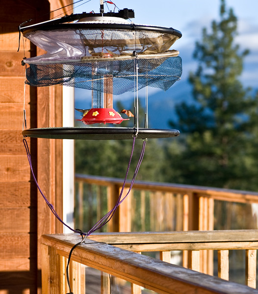 hummingbird trap