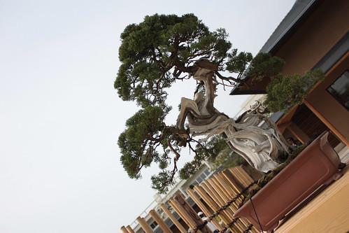 盆栽美術館と盆栽町