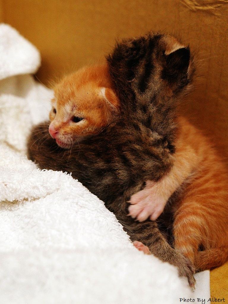 【貓咪】尋找主人中的可愛貓咪
