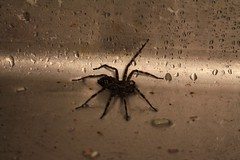 Up Island Spider. (Erica Robyn) Tags: island spider maine islesboro ericarobynphotography upislandspider ericarobyn