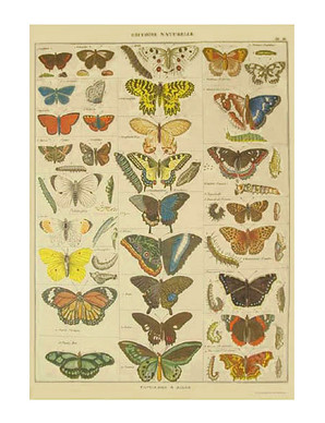 cavallini butterfly giftwrap
