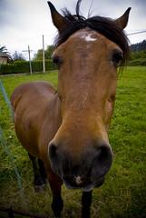 Hi! I'm a Horse (sparconada) Tags: viaje pez animal caballo ojo cara asturias divertido