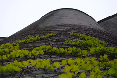 Vines Climbing up the Canada Malting Silos (Sally E J Hunter) Tags: toronto abandoned industrial silo harbourfront canadamalting historial moo1 55200mmf456 topwqq