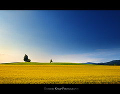 Swiss Countryside (Dominic Kamp) Tags: blue sky sun tree colors field yellow countryside swiss cottage crop simple dominic kamp simplistic