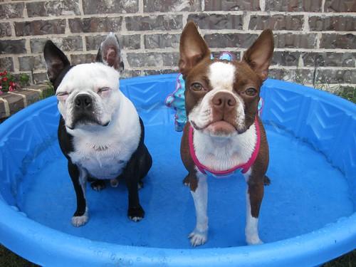 pool buddies!