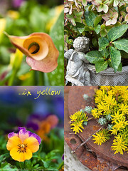 20100327_ArtKnappsFlowers-4