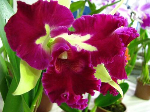 orquidea 0