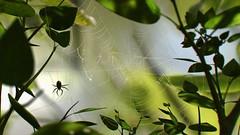 vrtx web