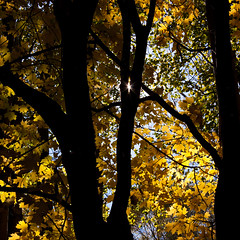 In the woods (greenicadesign) Tags: light sun fall yellow leaf woods