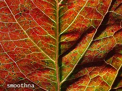 All in one. (smoothna) Tags: autumn macro fall nature leaves leaf pattern colourful e510 smoothna