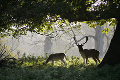 Deer (yvonnepay615) Tags: uk nature woodland lumix norfolk deer panasonic eastanglia holkham awesomeshot anawesomeshot 45200mm