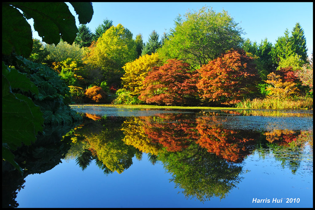 What is Perfect or Correct Exposure? - Fall Color in Van Dusen Garden Vancouver N5063e