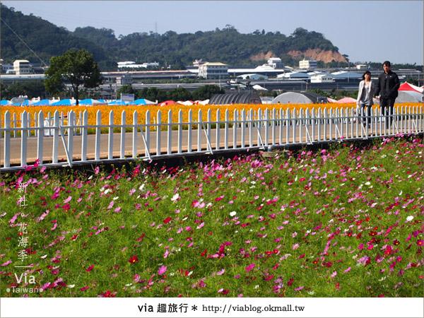 【2010新社花海】via帶大家欣賞全台最美的花海!5