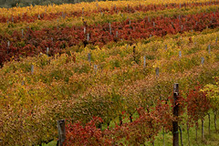 Lines (Massimo Valiani) Tags: life wood autumn red italy plants brown green colors leaves lines yellow vertical season grey sony falling massimo intensity roasted a350 valiani hozontal