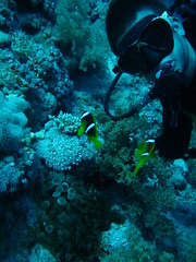 (Andurinha) Tags: redsea diving buceo marrojo raszaatar