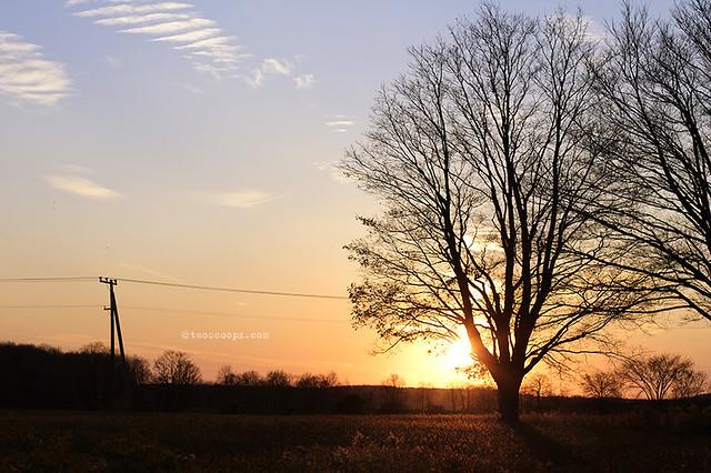 sunset 313/365