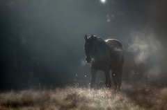 Morning Light (Latyrx) Tags: morning light shadow horse mist green colors field fog suomi finland river dark photography early photo nikon mood alone moody escape graphic forrest perspective bad atmosphere stare finnish try nikkor shape 70300mm vr 2010 bluehue ambiance latyrx d90 nikkor70300mm nikond90 mikkolagerstedt