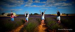 Love (Florette Photographie) Tags: valensole 04 lavandes fleurs lavandin alpesdehauteprovence nikon d600 france francia sud tourisme asiatique distillerie allemagneenprovence blé paca french violet mauve landscape paysage ligne géométrie été champ lavendel lavanda lavender love amour