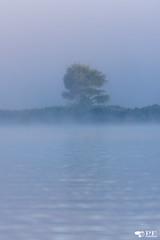 ''le solitaire!'' (pascaleforest) Tags: mist brume nature passion nikon kayak lac eau water été summer moorning matin arbre wood québec canada maraisdunord lack paysage landscape