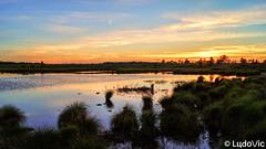 Le repos du soleil (Lцdо\/іс) Tags: brackvenn lцdоіс belgique belgium sunset eau water paysage landscape fagnes hautesfagnes eifel travel venn venen coucher soleil