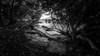 Live in the light (Ah Wei (Lung Wei)) Tags: penang penangisland georgetown pulaupinang malaysia georgetownpenang sunrises sunrise landscape shore seashore seascape samyang12mmf28edasncsfisheye samyang12mmf28 fisheye samyang defish penangbridge frontground sunlight air paysage beach nature light sun clouds hammerbay hammerbayikanbakar monochrome blackandwhite