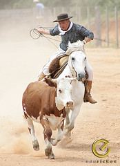 IMG_6118 (Edu Rickes) Tags: brazil horses brasil caballos cow cavalos rs riograndedosul sul tradicionalismo rodeio gaúchos beautifulshots piratini gineteada brazilianphotographers fotógrafosbrasileiros tirodelaço todososdireitosreservados fotógrafosgaúchos culturagaúcha edurickes belasimagens southofbrasil edurickesproduçõesfotográficas copyright©2010 fotografiaslegais
