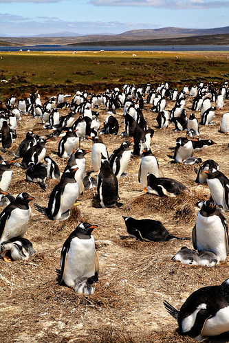 falkland islands 054 copy