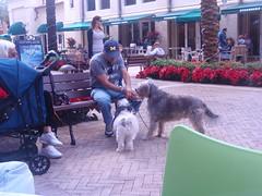 ice dogs mall florida eating cream icecream fl jupiter cityplace