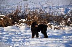 Enjoying the snow (Smart Community Fife) Tags: winter dog snow fife howe strath strathmiglo howeoffife strathmiglofife