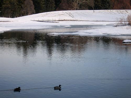park ducks