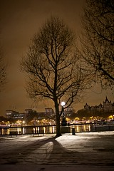 Snow Tree (Rupert Hitchcox LRPS) Tags: lighting snow london weather canon unitedkingdom documentary nighttime locations lenses cameragear thesouthbank canon35mm14l southbankproject canoneos5dmkii