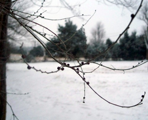 tree branch against the snow